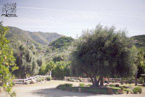 Ojai_Wedding_Olivetree_View